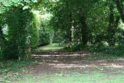 beech walk in the old garden