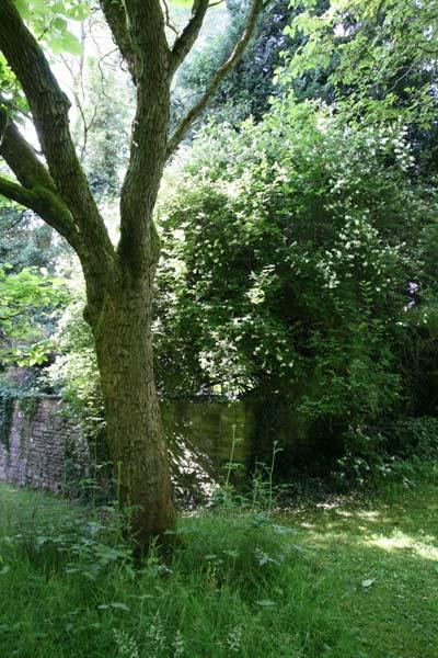 Specimen trees mature garden