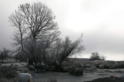 Winter rural pictures - just behind the house