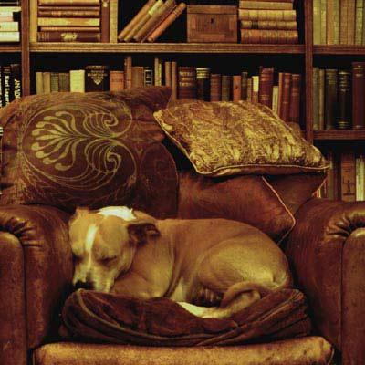 comfortable luxury