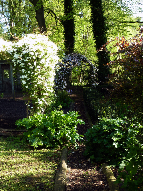 Clematis montana white and pink formal garden